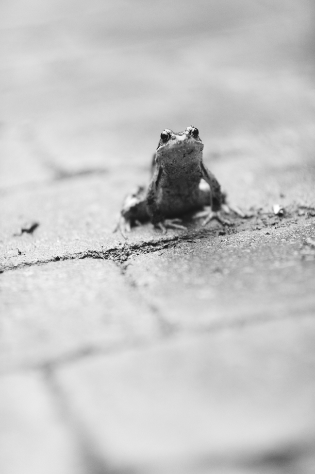 kikkers-2015-06-05.jpg