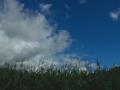 maisvelden drenthe