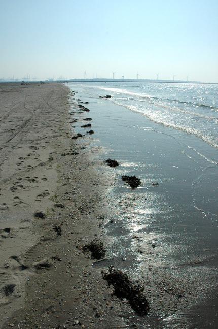 hoek van holland 1