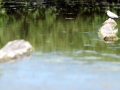 schier-2010-07-19
