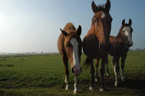 paarden_copy1