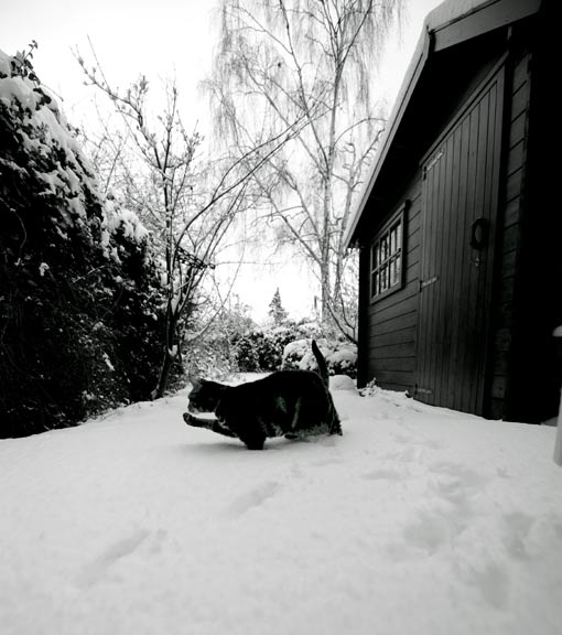 poes-2009-12-03
