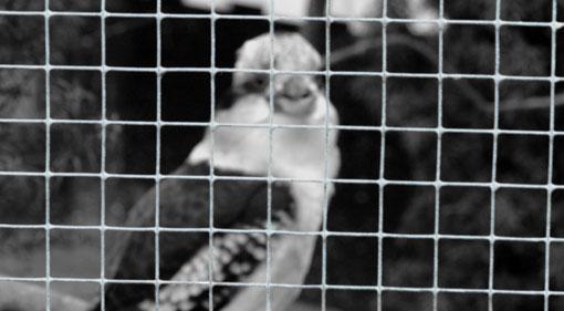 vogel-plaswijck